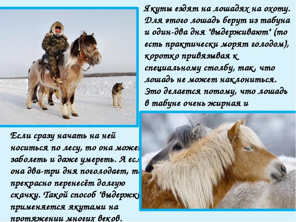 Масть якутских лошадей преимущественно серая, саврасая, мышастая. В лютые мор...