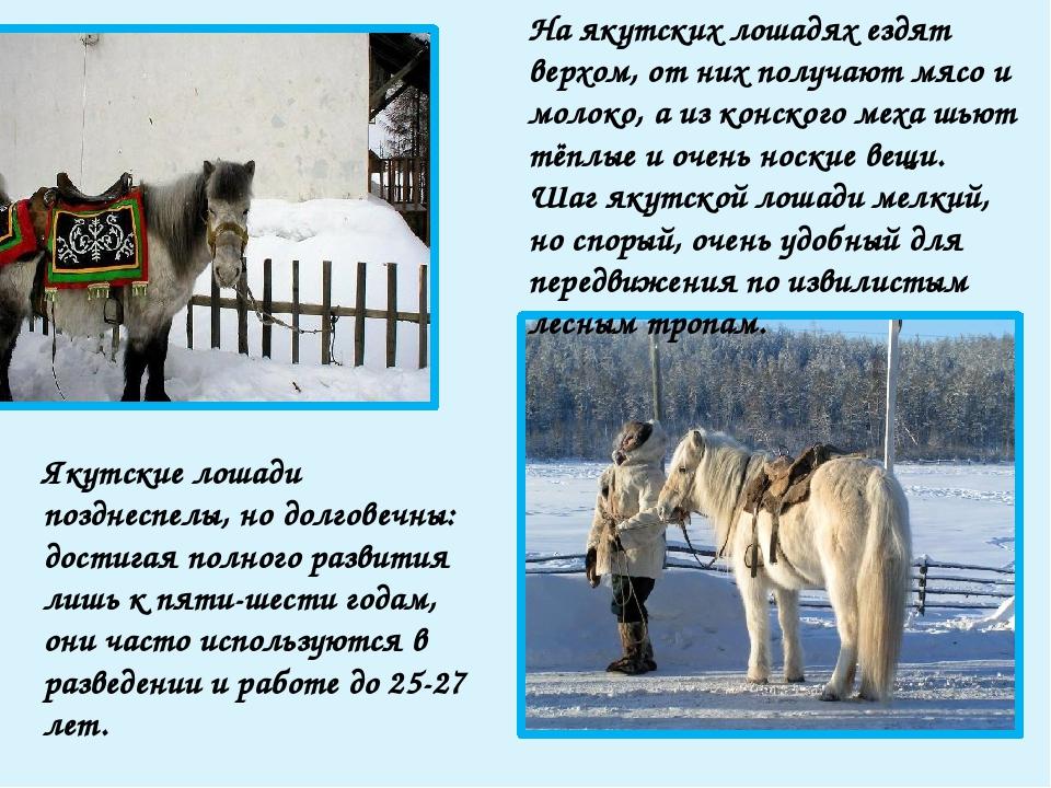Весной лошадей пасут на южных крутых склонах сопок (там микроклимат теплее),...
