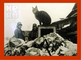 И тогда было принято решение доставить в Ленинград кошек. В апреле 1943 года
