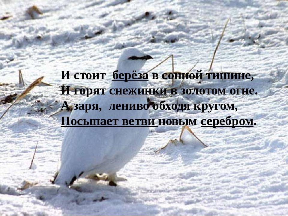 И стоит берёза в сонной тишине, И горят снежинки в золотом огне. А заря, лен...