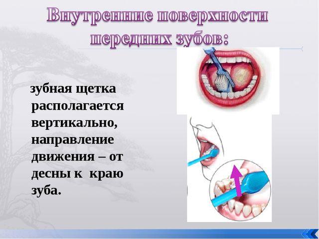 зубная щетка располагается вертикально, направление движения – от десны к кр...