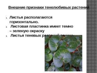 Внешние признаки тенелюбивых растений Листья располагаются горизонтально. Лис