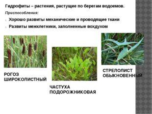 Гидрофиты – растения, растущие по берегам водоемов. Приспособления: Хорошо ра