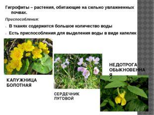 Гигрофиты – растения, обитающие на сильно увлажненных почвах. Приспособления: