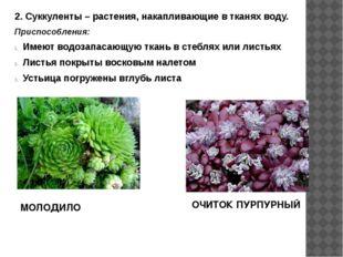 2. Суккуленты – растения, накапливающие в тканях воду. Приспособления: Имеют