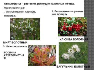 Оксилофиты – растения, растущие на кислых почвах. Приспособления: Листья мелк