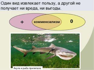 Один вид извлекает пользу, а другой не получает ни вреда, ни выгоды. Акула и