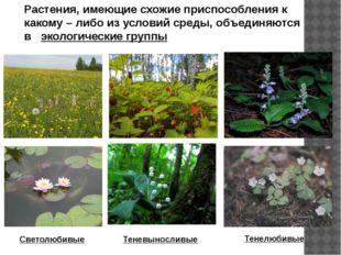 Растения, имеющие схожие приспособления к какому – либо из условий среды, объ