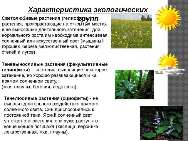 Характеристика экологических групп Светолюбивые растения (гелиофиты) - растен...