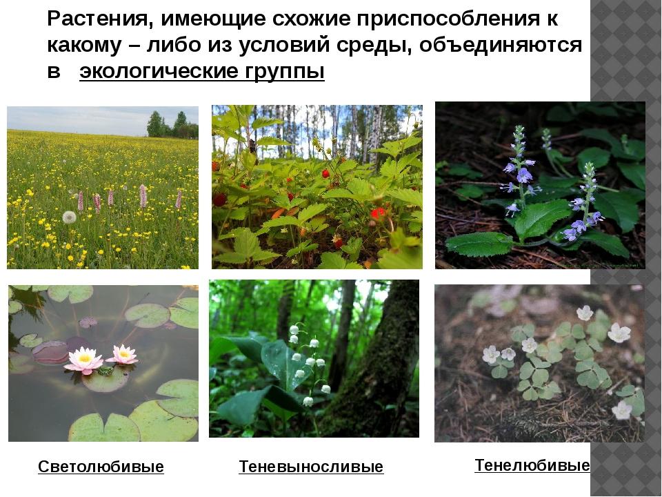 Растения, имеющие схожие приспособления к какому – либо из условий среды, объ...