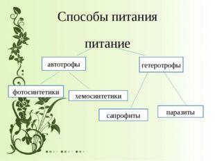 Способы питания питание автотрофы гетеротрофы фотосинтетики хемосинтетики сап