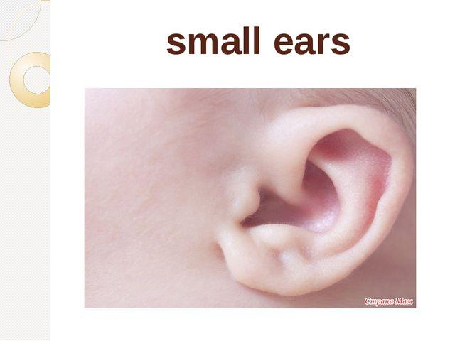 small ears