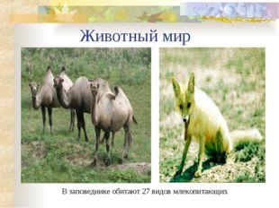 Животный мир В заповеднике обитают 27 видов млекопитающих