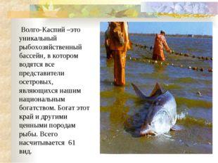 Волго-Каспий –это уникальный рыбохозяйственный бассейн, в котором водятся вс