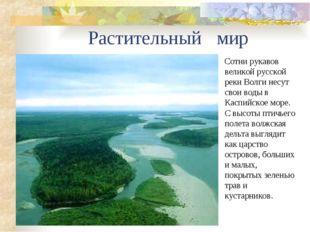 Растительный мир Сотни рукавов великой русской реки Волги несут свои воды в