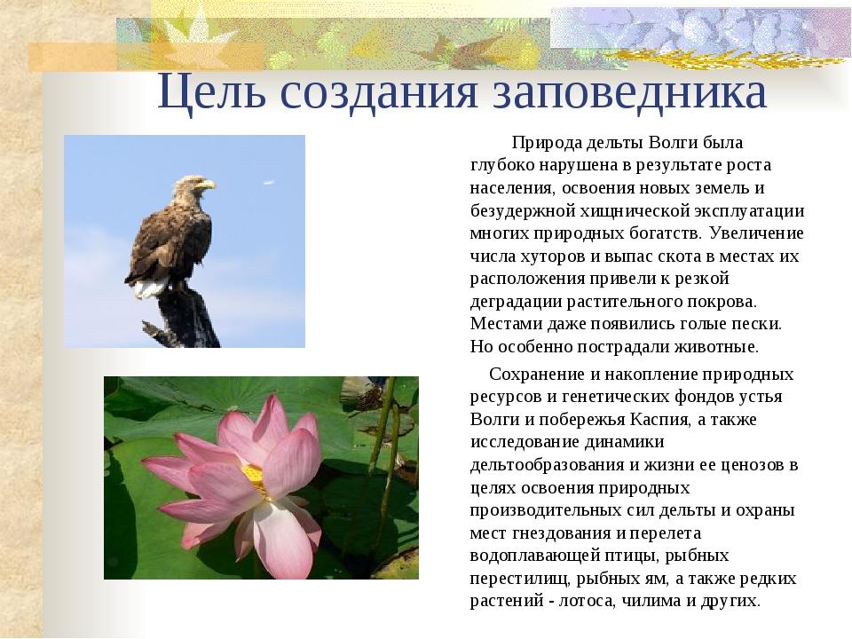 Цель создания заповедника Природа дельты Волги была глубоко нарушена в резуль...