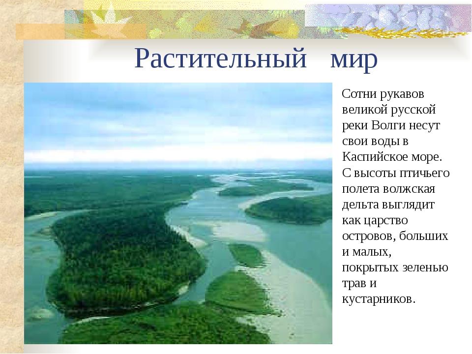 Растительный мир Сотни рукавов великой русской реки Волги несут свои воды в...