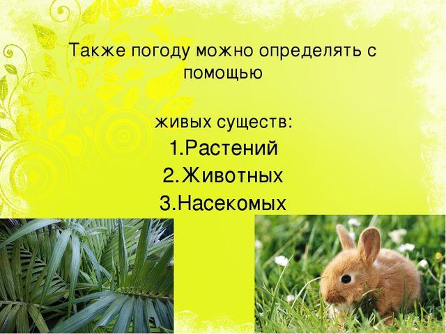 Также погоду можно определять с помощью живых существ: 1.Растений 2.Животных...