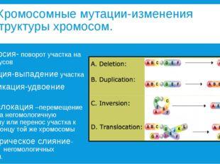 Хромосомные мутации-изменения структуры хромосом. 1. Инверсия- поворот участ