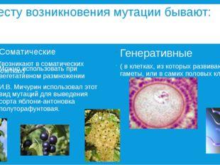 По месту возникновения мутации бывают: Соматические (возникают в соматических