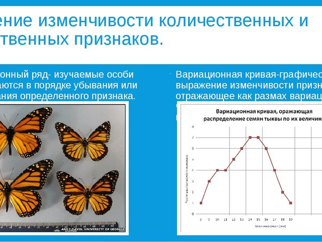Изучение изменчивости количественных и качественных признаков. Вариационный р...