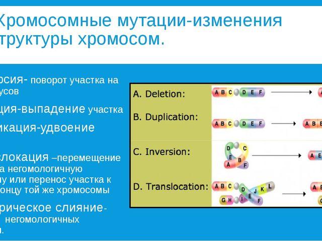 Хромосомные мутации-изменения структуры хромосом. 1. Инверсия- поворот участ...