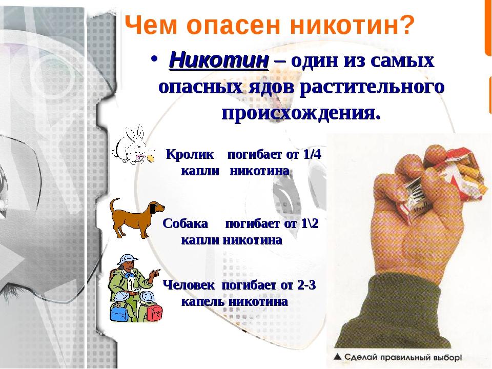 Чем опасен никотин? Никотин – один из самых опасных ядов растительного происх...