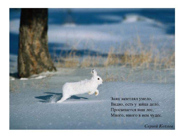 Заяц запетлял умело, Видно, есть у зайца дело, Просыпается наш лес, Много, мн...