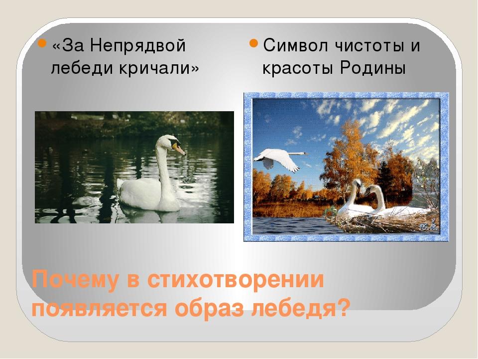 Почему в стихотворении появляется образ лебедя? «За Непрядвой лебеди кричали»...