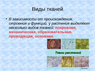 Виды тканей В зависимости от происхождения, строения и функций, у растения вы