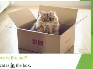 Where is the cat? in The cat is in the box.