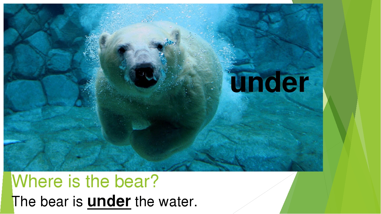 Where is the bear? under The bear is under the water.