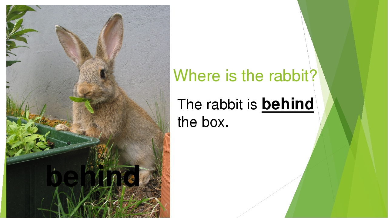 Where is the rabbit? behind The rabbit is behind the box.