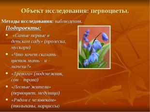 Объект исследования:первоцветы. Методы исследования:наблюдения. Подпроекты: