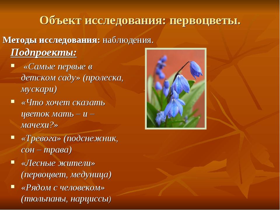 Объект исследования:первоцветы. Методы исследования:наблюдения. Подпроекты:...