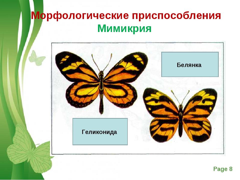 Морфологические приспособления Мимикрия Геликонида Белянка Free Powerpoint Te...