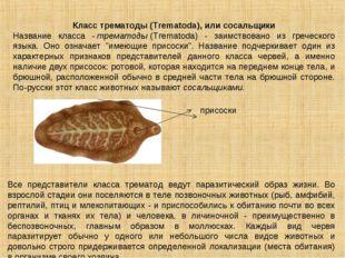 Класс трематоды (Trematoda), или сосальщики Название класса -трематоды(Тгеm