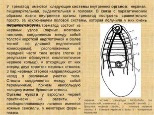 У трематод имеются следующиесистемывнутреннихорганов: нервная, пищеварител