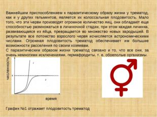 Важнейшим приспособлением к паразитическому образу жизни у трематод, как и у