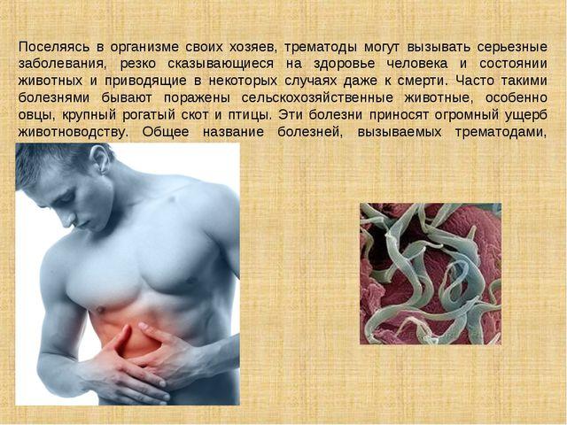 Поселяясь в организме своих хозяев, трематоды могут вызывать серьезные заболе...