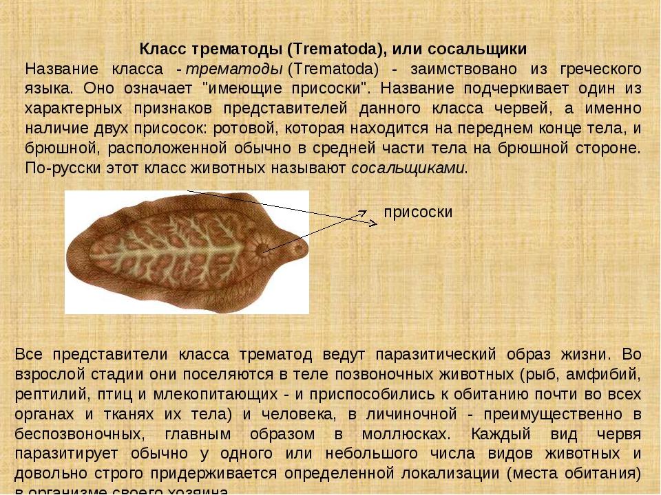 Класс трематоды (Trematoda), или сосальщики Название класса -трематоды(Тгеm...