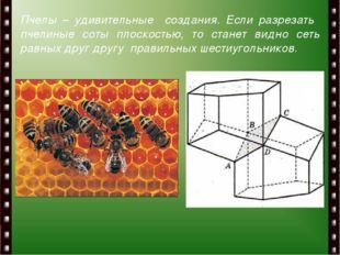 Пчелы – удивительные создания. Если разрезать пчелиные соты плоскостью, то с