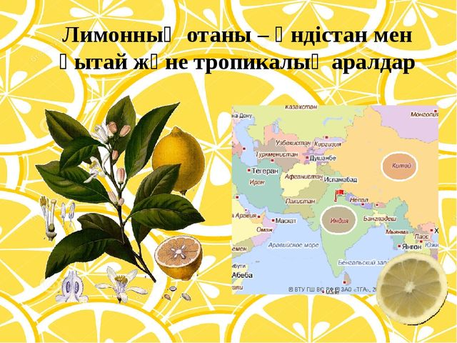 Лимонның отаны – Үндістан мен қытай және тропикалық аралдар