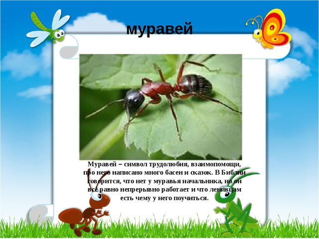 муравей Муравей – символ трудолюбия, взаимопомощи, про него написано много ба...