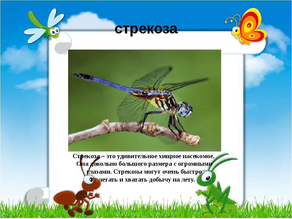 стрекоза Стрекоза – это удивительное хищное насекомое. Она довольно большого...