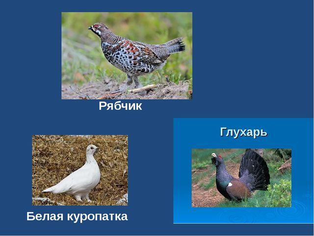 Рябчик Белая куропатка