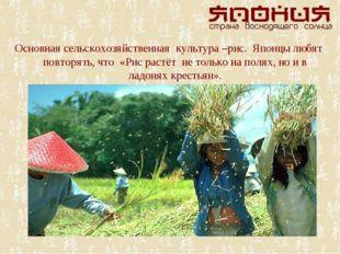 Основная сельскохозяйственная культура –рис. Японцы любят повторять, что «Рис