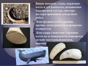 Бивни мамонта, слона, моржовая кость и зуб кашалота, называемые благородной к