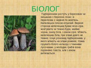 БІОЛОГ Підберезники ростуть у березових чи змішаних з березою лісах і в перел