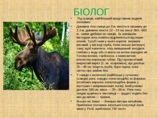 БІОЛОГ Рід ссавців, найбільший представник родини оленевих. Довжина тіла сам